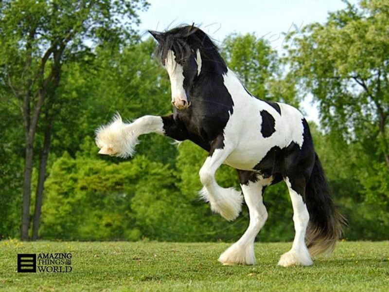 Beautiful Baby Horses Wallpaper Beautiful Horses Wallpapers