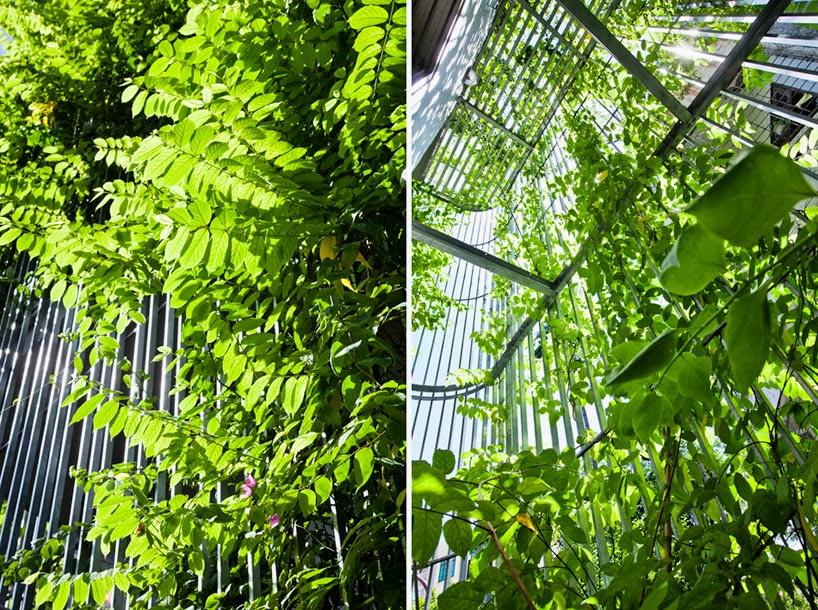 konsep-green fall-unsur-alami-segar-dan-asri-pada-desain-fasad-rumah-ruang dan rumahku-007