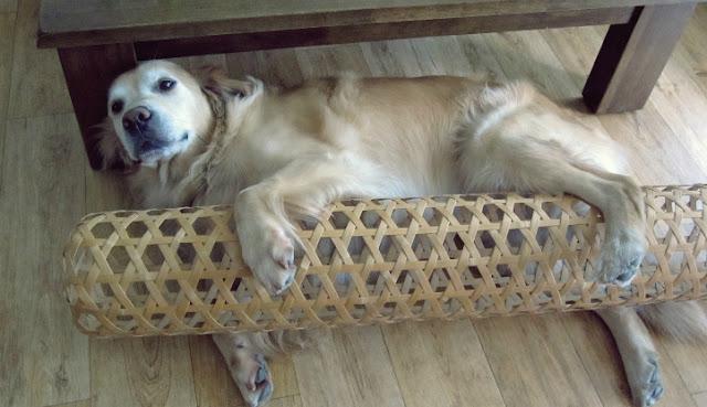 Perro durmiendo con mujer de bambú