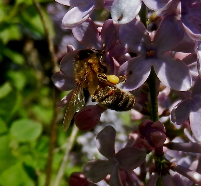 Bees are the source of all happyDay Farm's goodness.