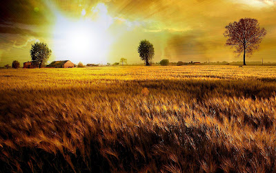 Nature veld wallpaper - prairie wallpaper sunrise
