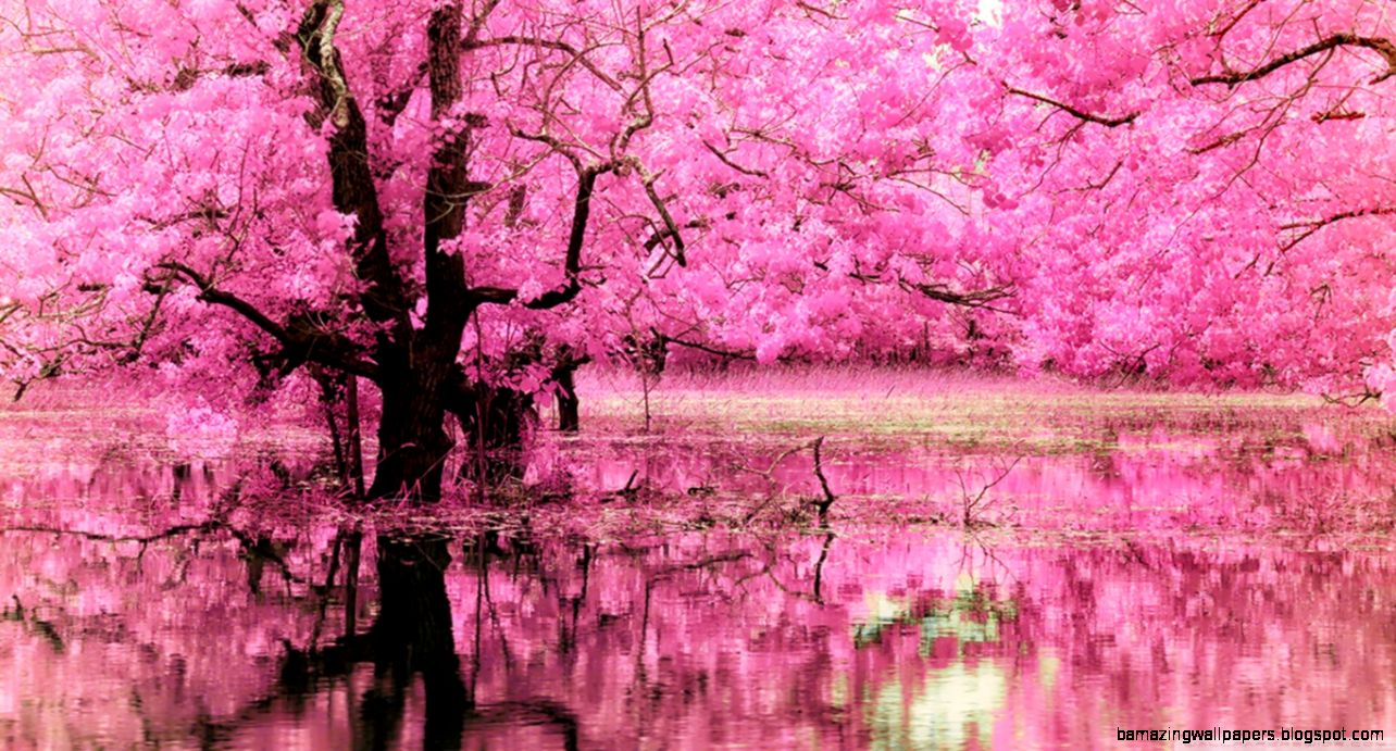 Pink Trees Reflected In Water Wallpapers  Hd Wallpapers