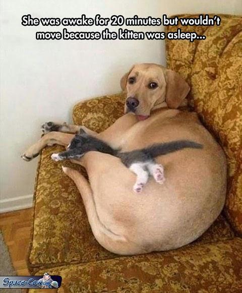 funny cute pets pics