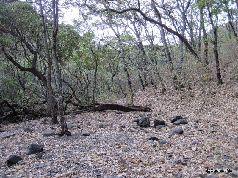 Área de acampado en a entrada al valle de la barranca El Tecuán.