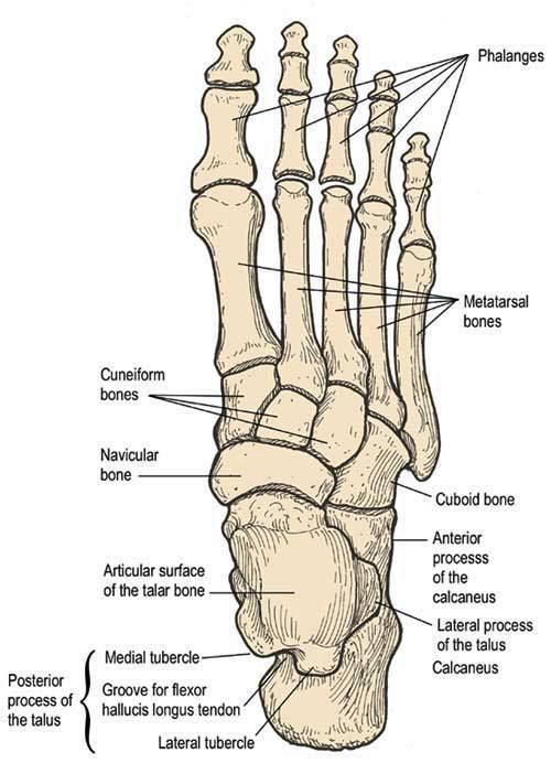 Foot Deformities 2015