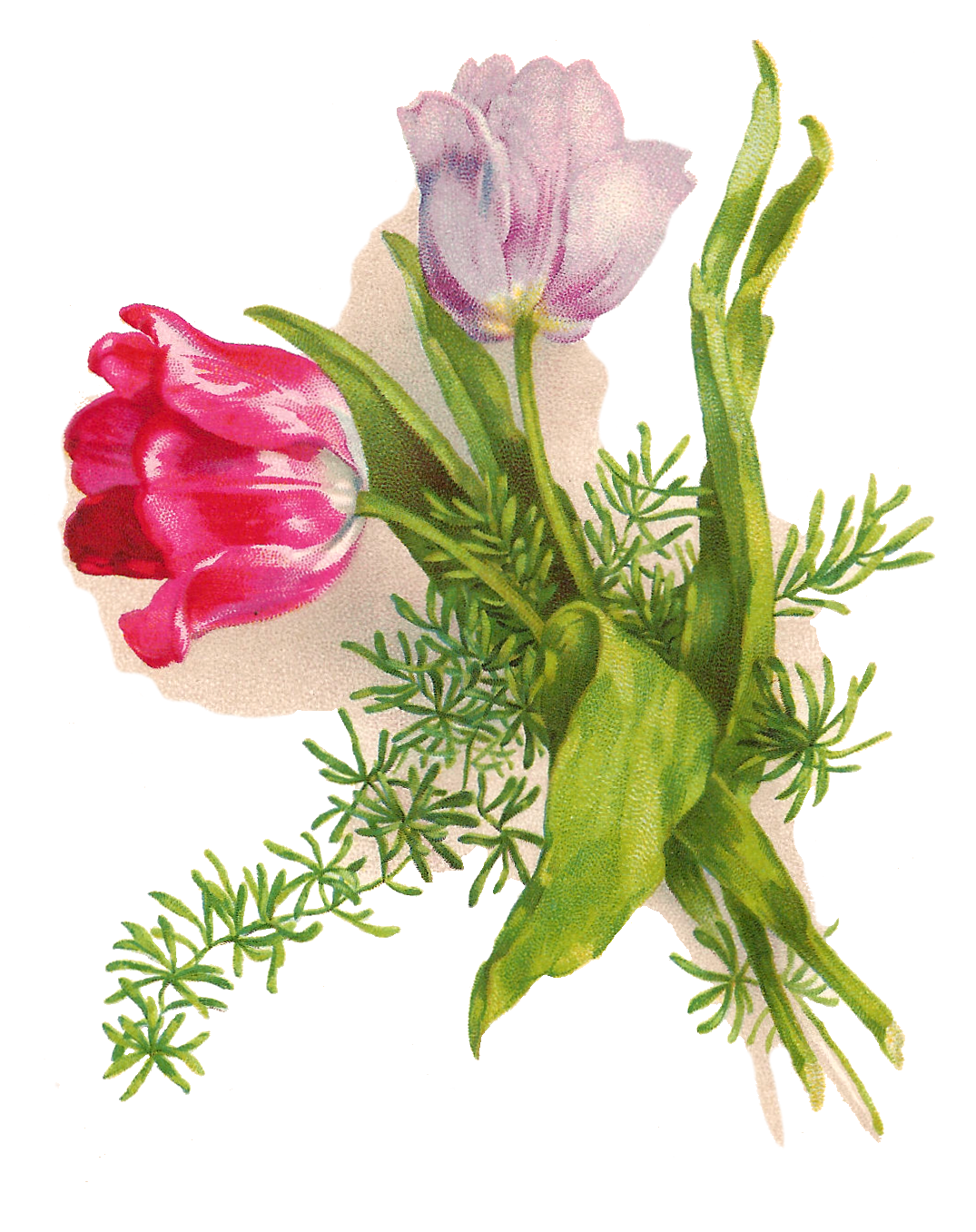 flowers drawing png