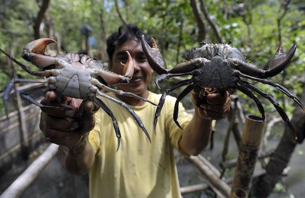 WARTA PANCING: Cara Memancing Kepiting