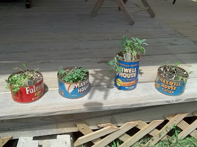 Herbs in old coffee cans