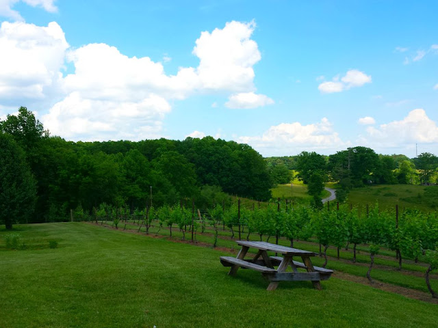 NC Wine Adventures in the Yadkin Valley Wine Region. Great for a getaway for girlfriends, families, and couples. In this post, we explore the wines of six different wineries.