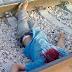 انتحار شخص تحت عجلات القطار بمحطة الدار البيضاء المسافرين