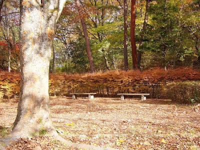 京都市・宝が池公園ウォーキング