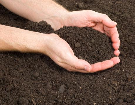 Hand Dirt