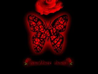 رسائل حب ايها الفراشة المغردة