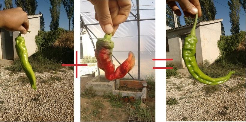 Mezcla 3 de variedades en La Regadera Verde