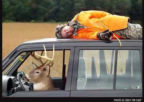http://3.bp.blogspot.com/-yASH8z_cMg0/TlgdGeFclII/AAAAAAAADf0/f6ICSiab5Gs/s1600/Funny+deer+images2.jpg