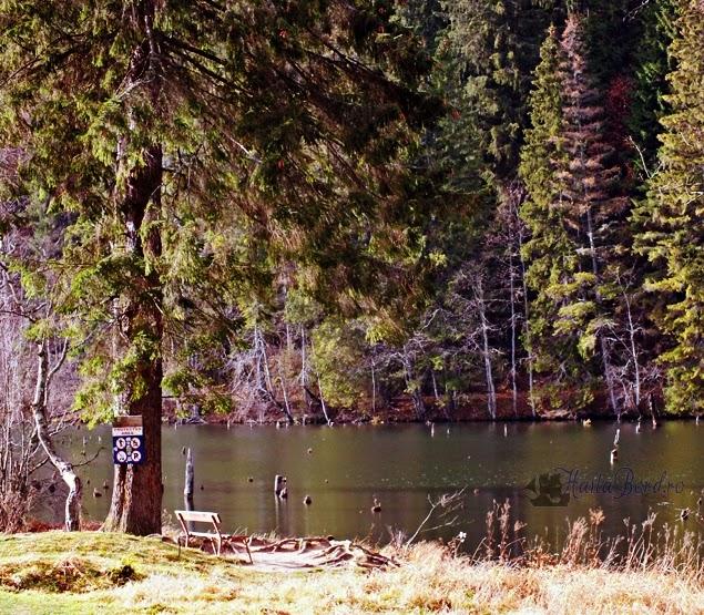 lacul rosu 2013
