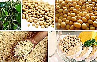 manfaat kacang kedelai untuk kesehatan