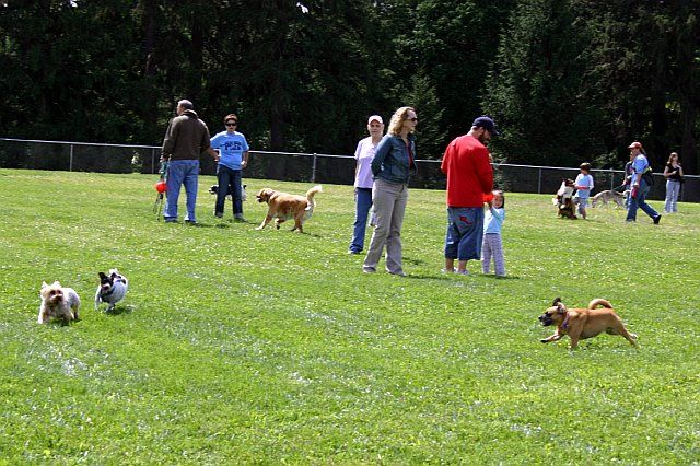 LOCAL DOGS ENJOYING A DAY AT THE PARK