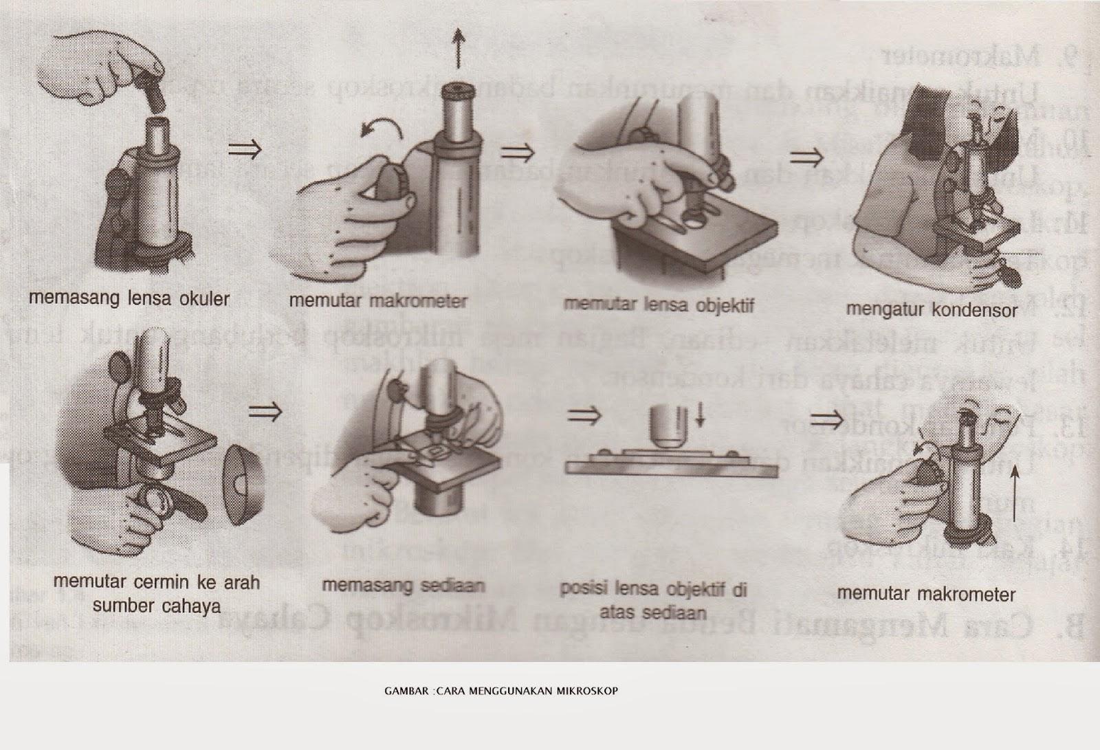 cara menggunakan, pengertian dan bagian-bagian mikroskop beserta fungsi-fungsinya