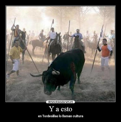Toro de la Vega, barbarie Made in Spain