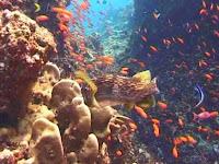 Taman Laut Pulau Rubiah Sebagai Salah Satu Tujuan Wisata Bahari di Sabang