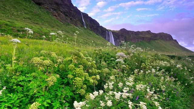 Iceland Morning Scenery