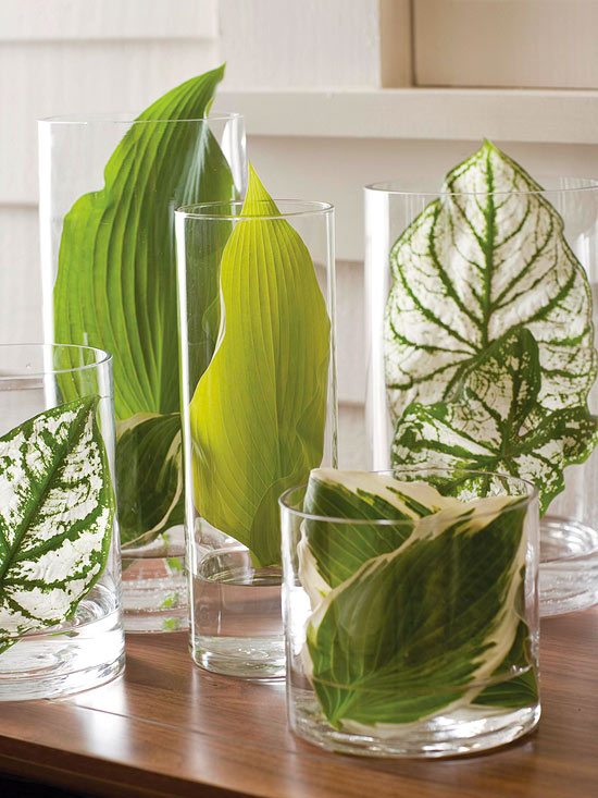 These natural large plant leaves are the perfect way to add a pop of green to your decor