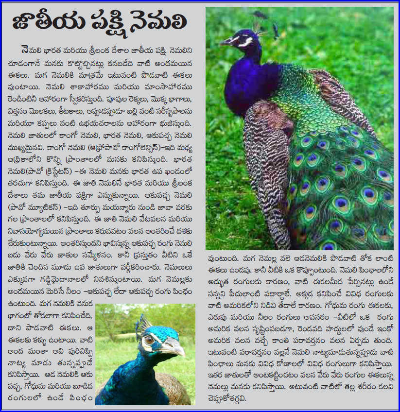 the national bird peacock essays If you do not find what you need here, you can tell us what exactly you want we shall try to help you by writing a new school essay, paragraph, etc.