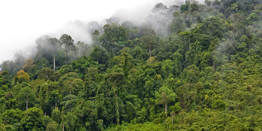 rainforest at the Kayan River, East Kalimantan, Indonesia