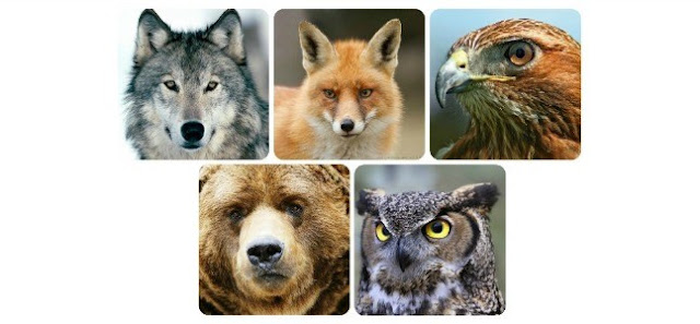 Top 5 Spirit Animals – Which is Yours?