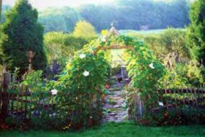 Vườn rau đẹp  vuon rau dep