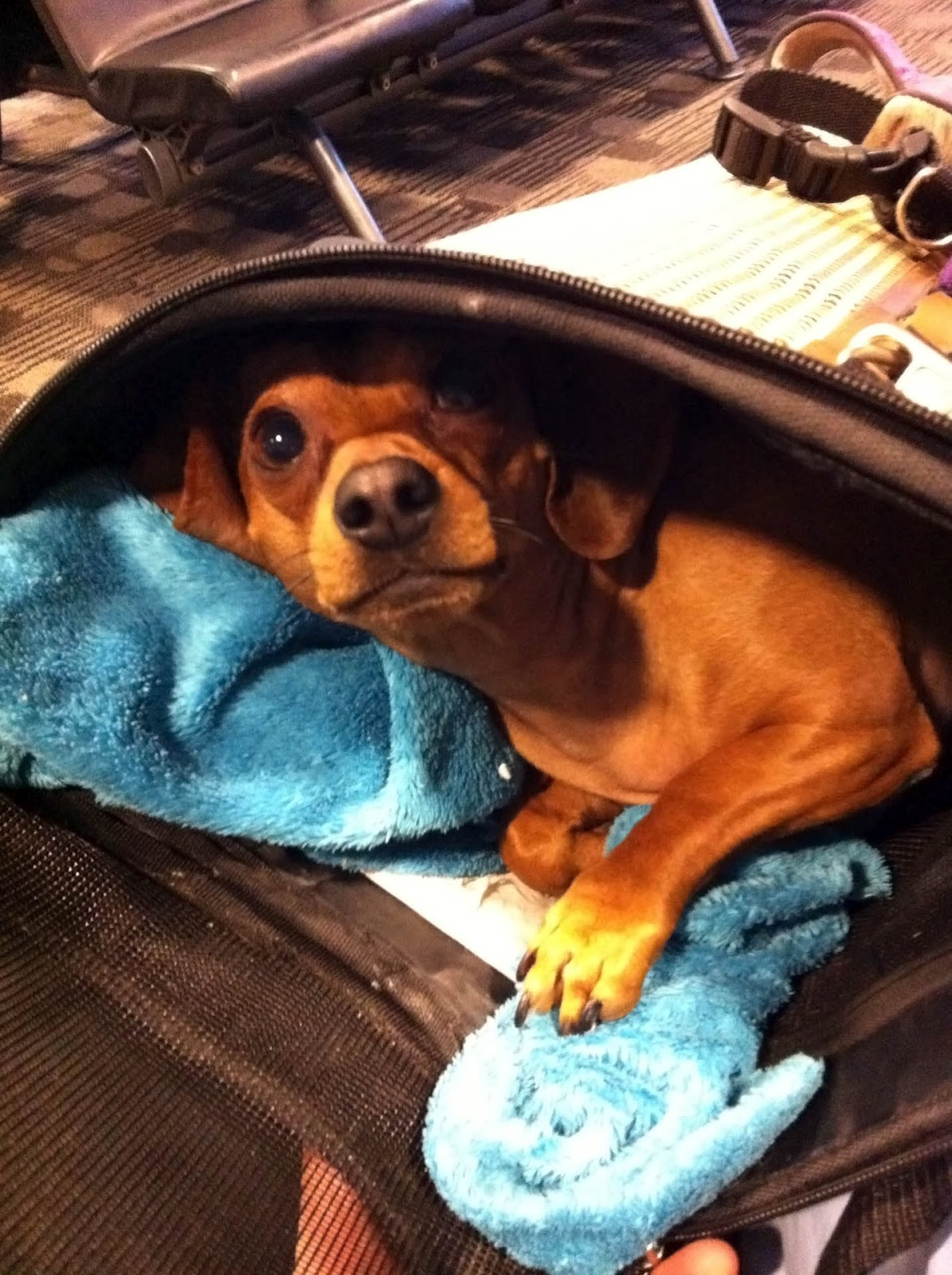 The stroke blog why can 39 t i fly to the uk with my pet in for Air canada pet in cabin