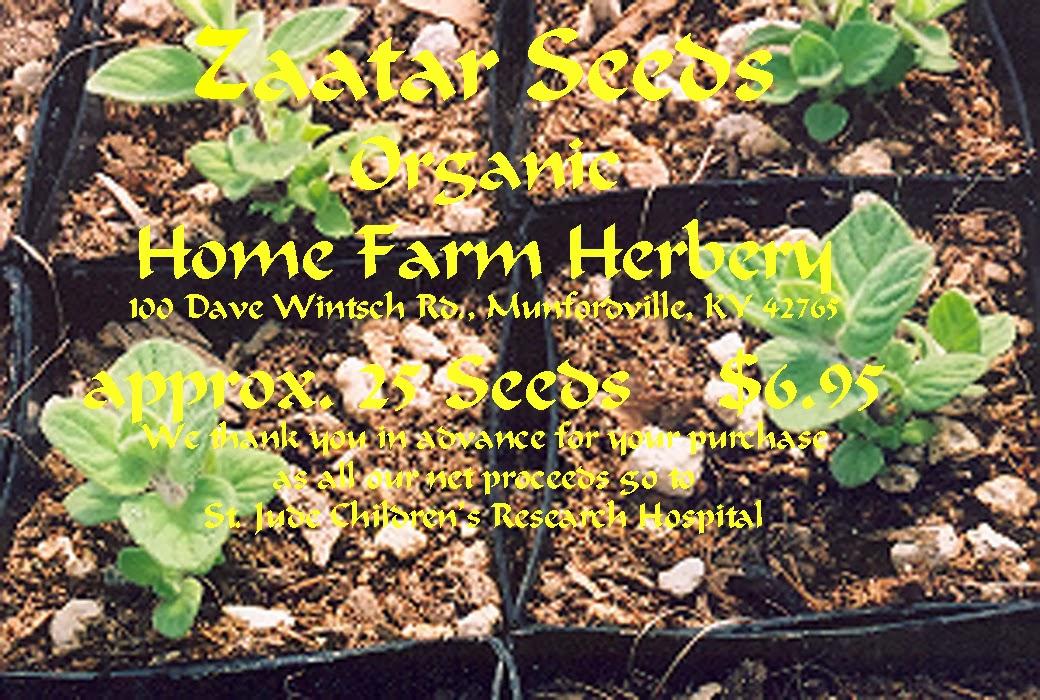 OREGANO Herb 100 seeds Italian vegetable garden garnish Heirloom green HEALTHY