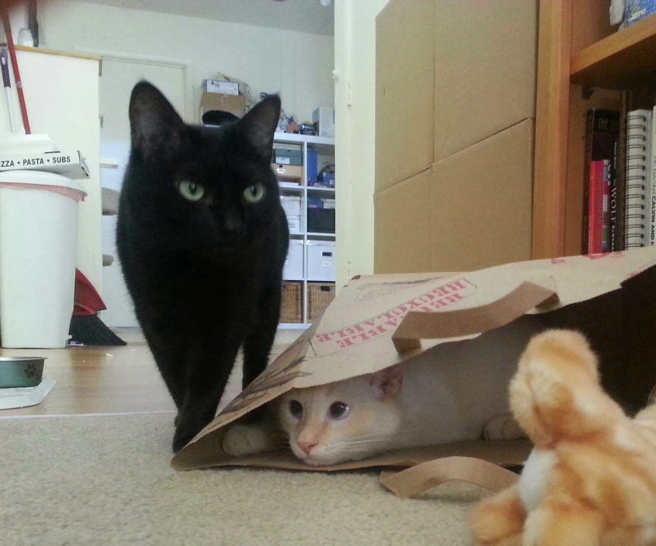 Funny cats - part 86 (40 pics + 10 gifs), cat ready to ambush other cat