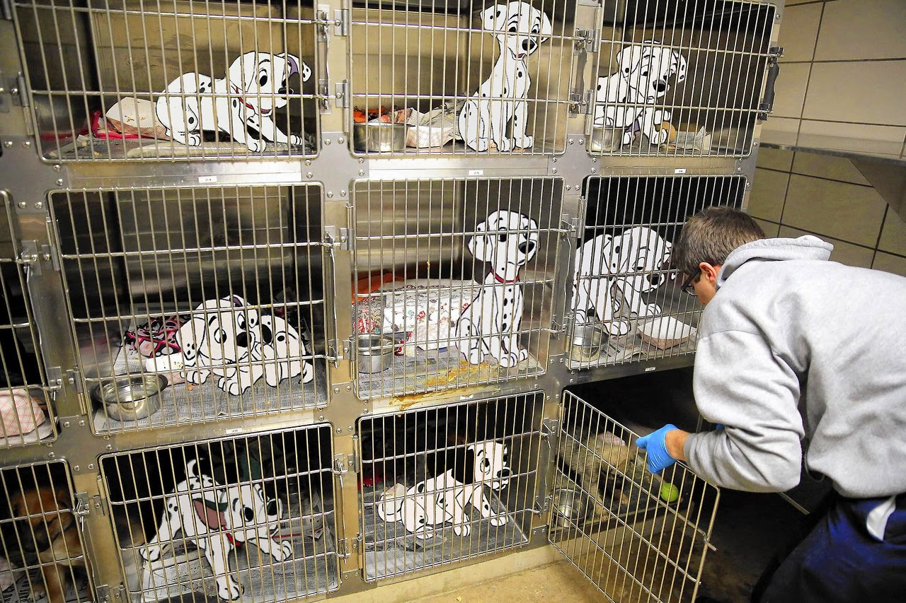 101 dalmatians in a dog shelter