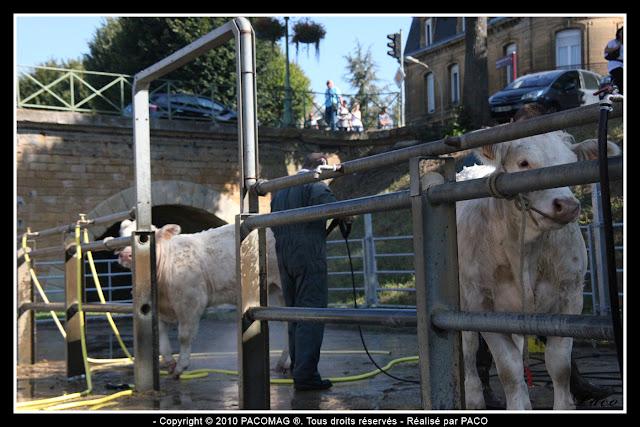 lavage des vaches à la foire Commerciale et Agricole de Sedan