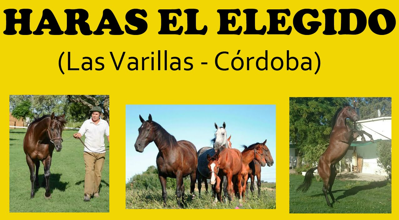 HARAS EL ELEGIDO