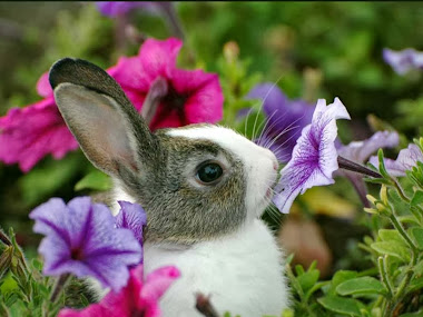 Baby Rabbits HD Wallpapers