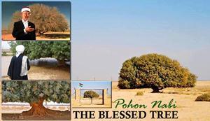 Pohon Nabi Muhammad