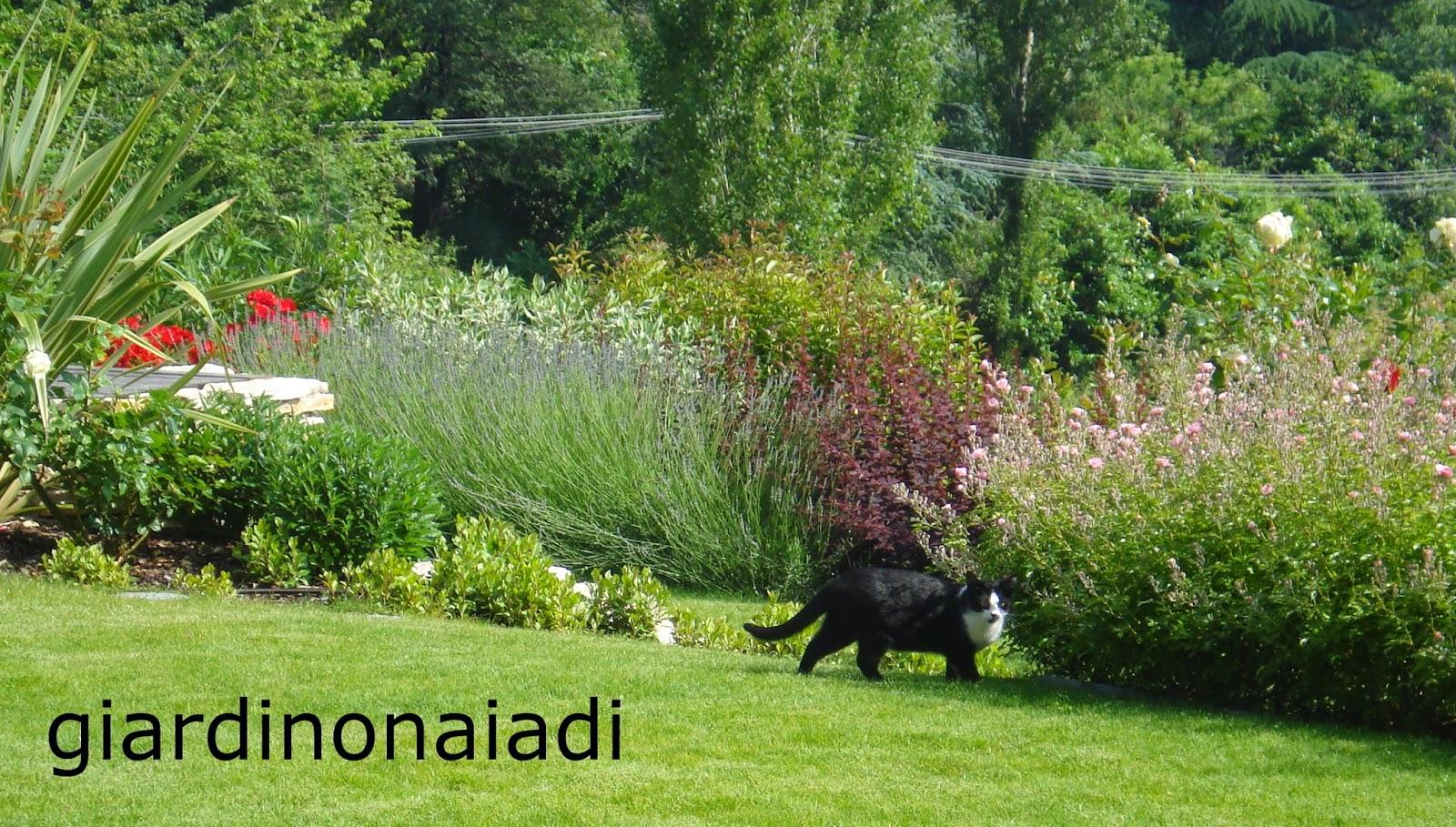 Il giardino delle naiadi un giardino bello tutto l 39 anno - Arbusti da giardino sempreverdi ...