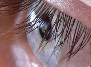 Manfaat Dan Kegunaan Bulu Mata Untuk Tubuh