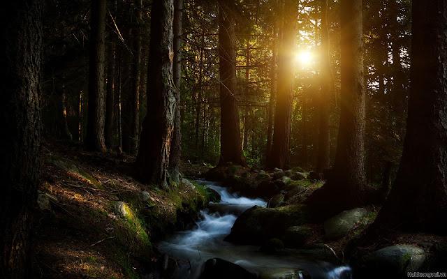 hình nền thiên nhiên núi rừng, suối chảy