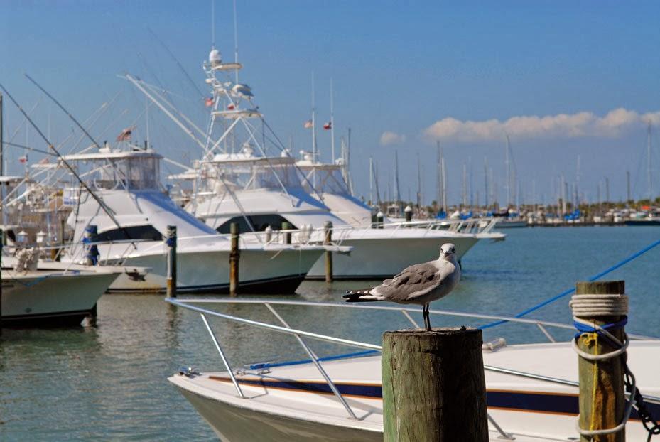 Port aransas home tour for Fishing port aransas