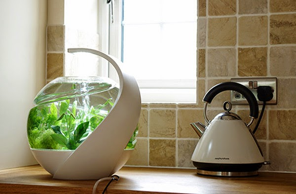 Tropical Fish Tank Cleaners Tropical-fish-tank