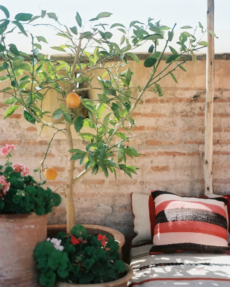 Coastal outdoor space with potted plants