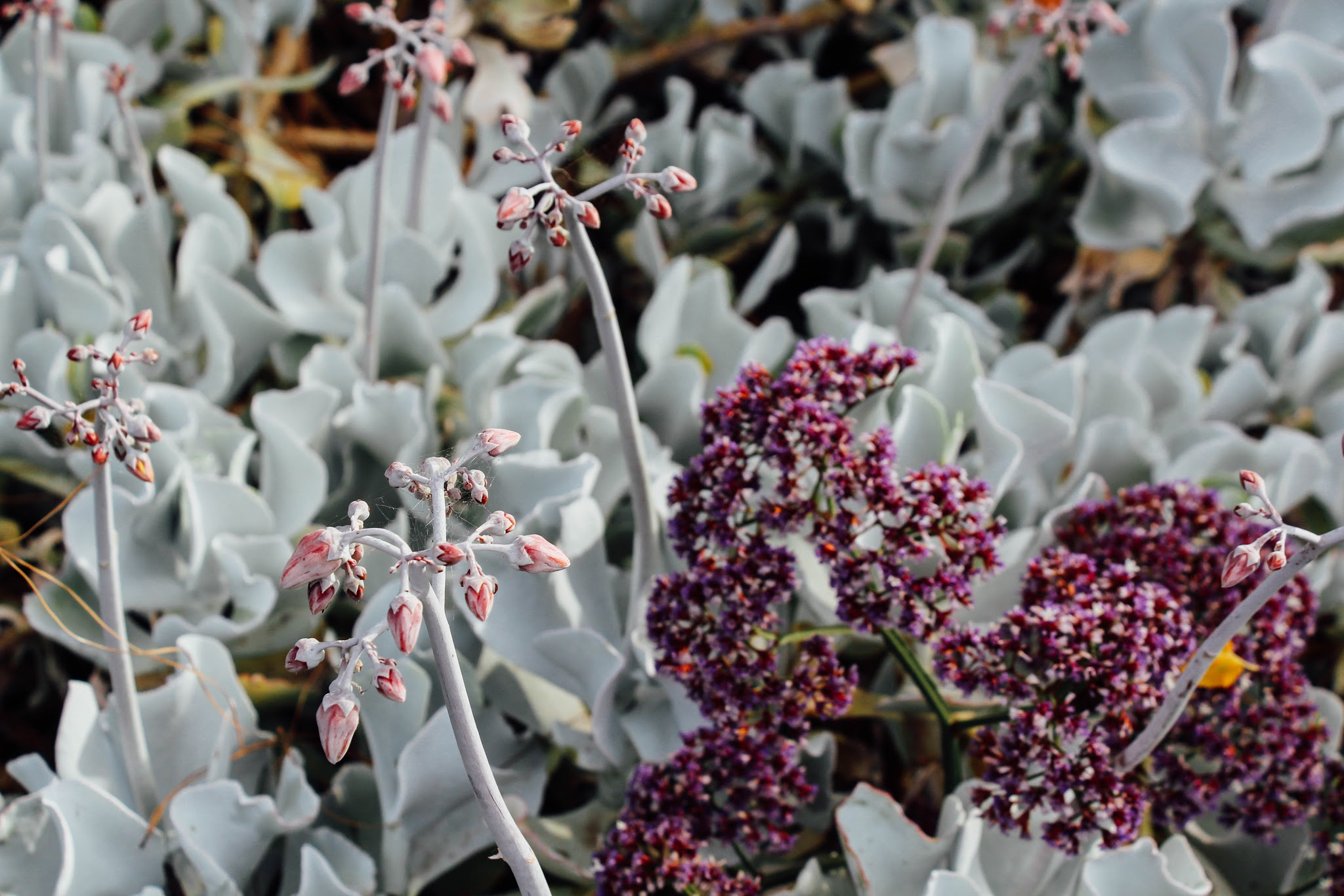 Melbourne Guide Royal Botanic Gardens
