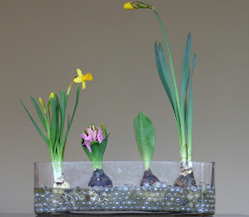 Learning about Spring Bulbs from Fun at Home with Kids