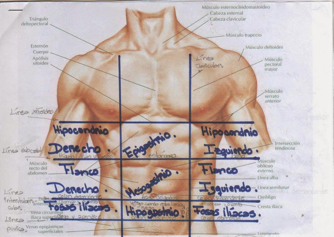 Morfofisiología I: GENERALIDADES DE LA ANATOMÍA