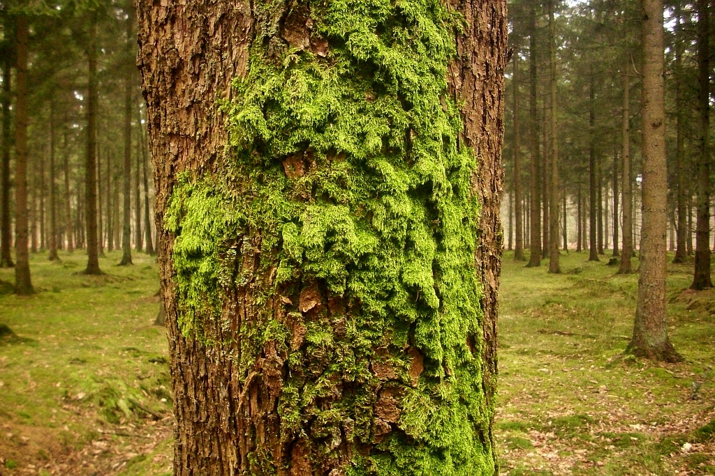 how to draw moss on a tree