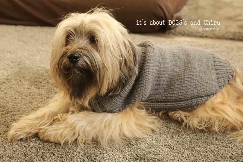DIY für Hunde | Hundepullover selber stricken - ABOUT DOGS AND CHIRU ...